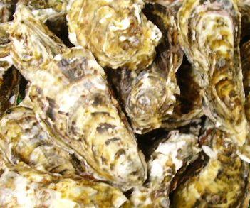 広島産 殻つき牡蠣